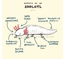 Anatomy of an Axolotl Photographic Print