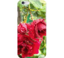 Wet red roses 3 iPhone Case/Skin