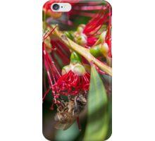 Australian Bottlebrush flower with Bee iPhone Case/Skin