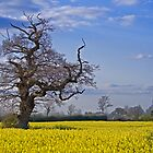 bare tree 2 by gashwen