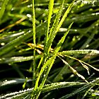 Droplets by Lee Jones