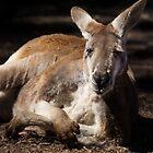 The Kangaroo Pose... by Chris Kean