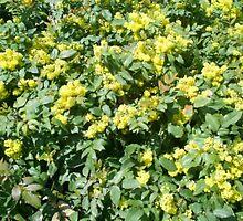 flowers on the bushes by oilersfan11