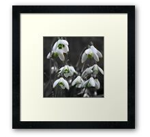 First signs of Spring Framed Print