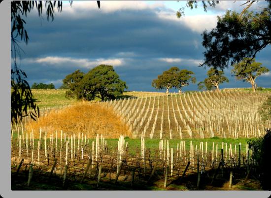 Howard Vineyard - Adelaide Hills by Leeo