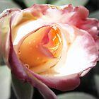 Undeniably Pink by Jen Marsh