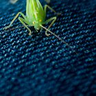 Green Bug by Will Foster