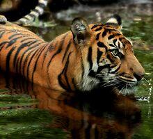 Tigress by Natalie Manuel