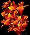 Tulip Fleur-de-Lis by Chris Lord