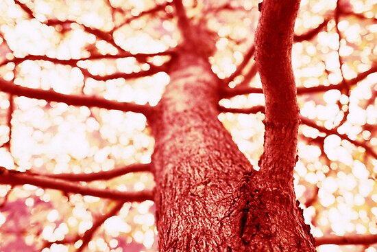 Red Tree by John Violet