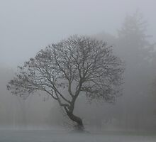 Foggy Morning Tree by Gilda Axelrod