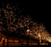 Salamanca Lights by Kelly McGill