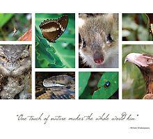 Animals 1 by Hazel Wallace