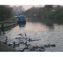 flock - hertfordshire Photographic Print