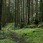 Woodland Escape by Mariya Olshevska
