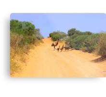 Emus on the track Metal Print