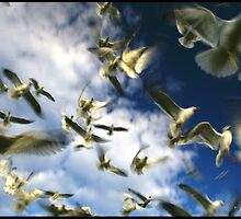 Seagull Swarm Three by AbbieJebson