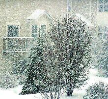 April snow by Rodica Nelson
