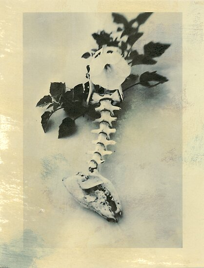 Datura Flower and Coyote Bones by Antaratma Images