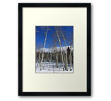 Dusted Aspens Framed Print