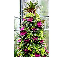 A Tropical Christmas Tree Longwood Gardens Photographic Print
