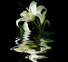 Elegant reflection by Sue Wilson (Kane)