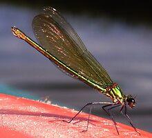 Narrow Boat Dragonfly by moneyspider