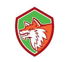 Red Fox Head Pouncing Shield Retro by patrimonio