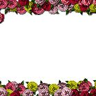 Roses Card Background by samc352
