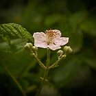 Wild Blackberry by Elaine Teague