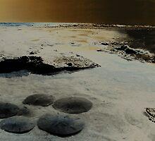 Sand dollars on the Beach1 by Silly4Idea