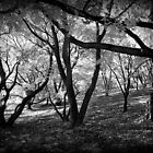 Holga Trees by David Schroeder