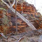 Aligator Gorge - Wilmington South Australia by Linda Hitch