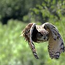 Eagle Owl in flight  by larry flewers