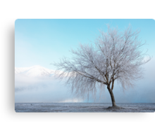 Wanaka Willow Canvas Print