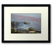 Flamingoes of Lake Nakuru, Kenya. Framed Print