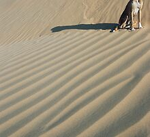 Dune Dog, India by emmack