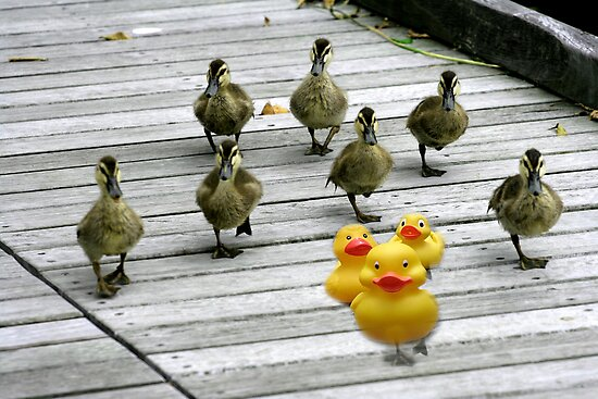 """""""Ten Little Ducks Went Out One Day"""" by Karen Cougan"""