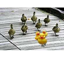 """""""Ten Little Ducks Went Out One Day"""" Photographic Print"""