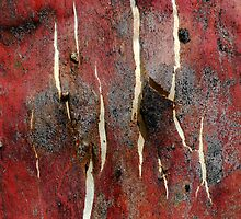 Cracked Snow Gum Bark by John Barratt