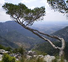 Mallorcan Viewpoint by Frederick Wood