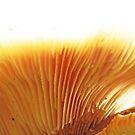 Underside of a super duper mushroom by sarnia2