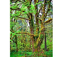 olympic national park Photographic Print