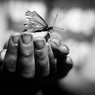 butterfly catching b&W by Candice84