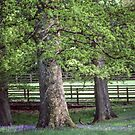 Trees with Bluebells at Troutbeck England 198405190013 by Fred Mitchell