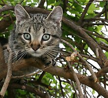 FRANKIE TIGGER, UP A TREE! by Brenda Planchon