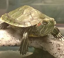 Bowser the baby turtle  by geekchic4756