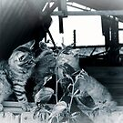 Kitten spat by Lynn Starner