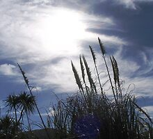 pampas gras at the beach by Susanne Schmitz