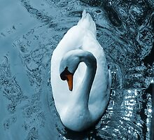 Swan II by shane22